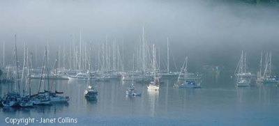 Photo Gallery Image - Misty Morning (Permission Janet Collins)